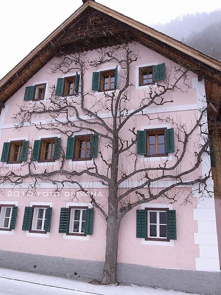 這邊有很多貼著房子長的樹,幫立面加分