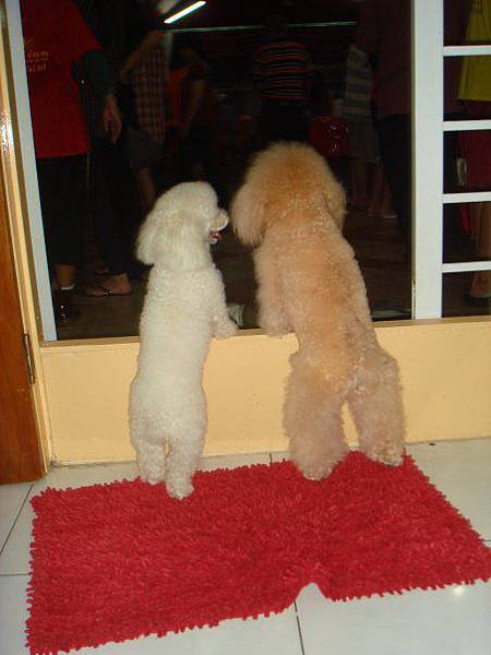 dogs...jpg