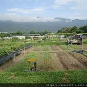 安全野菜市場1