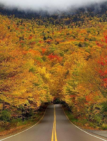 美國佛蒙特州國家公園的秋葉隧道
