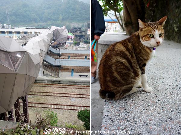 35_瑞芳猴硐貓村