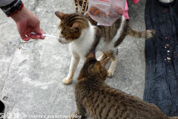 13_瑞芳猴硐貓村
