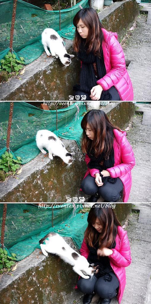 16_瑞芳猴硐貓村