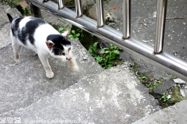 26_瑞芳猴硐貓村