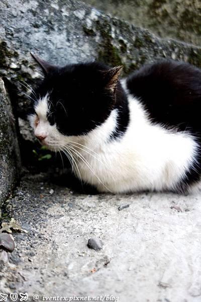 27_瑞芳猴硐貓村