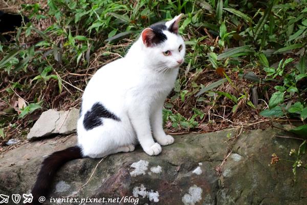 18_瑞芳猴硐貓村
