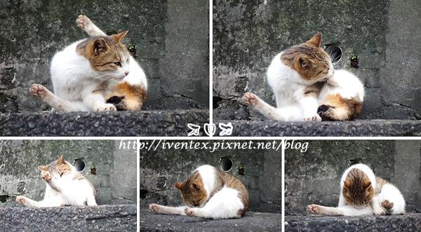 29_瑞芳猴硐貓村