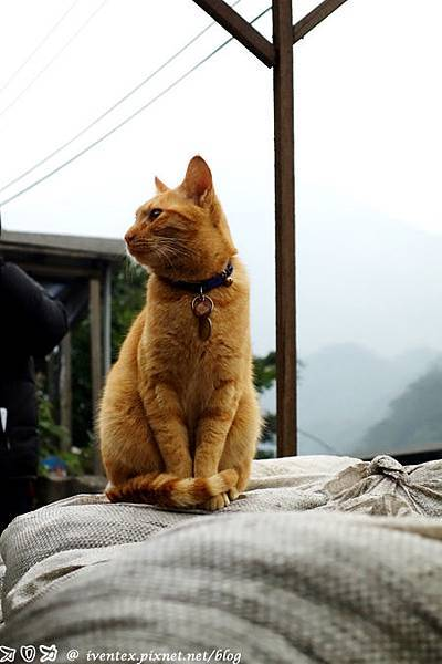 30_瑞芳猴硐貓村