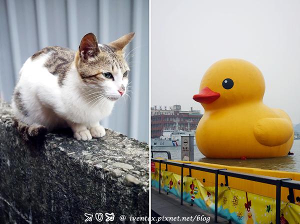 48_猴硐貓村+基隆黃色小鴨