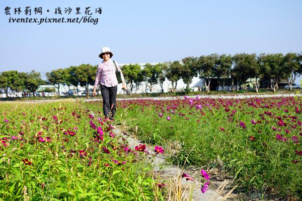 04_雲林莿桐孩沙里花海