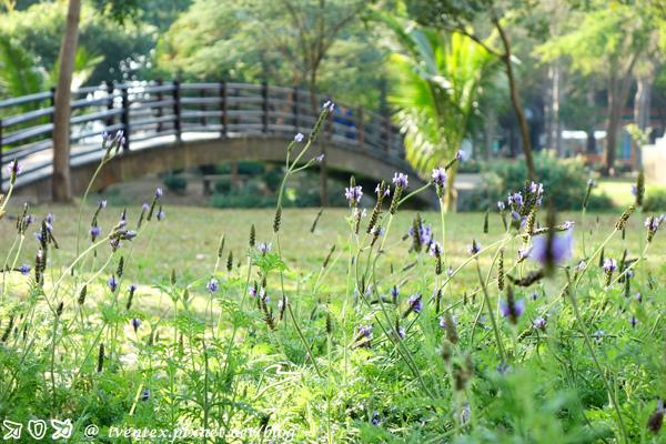 03_台南巴克禮公園