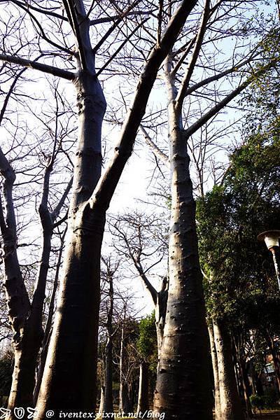 21_台南巴克禮公園