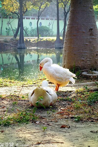 23_台南巴克禮公園
