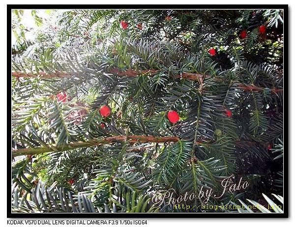 nEO_IMG_法蘭克福郊區別墅的聖誕樹.jpg