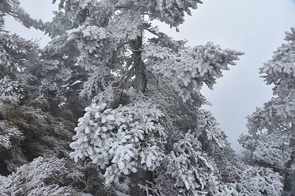 212合歡山追雪20.jpg