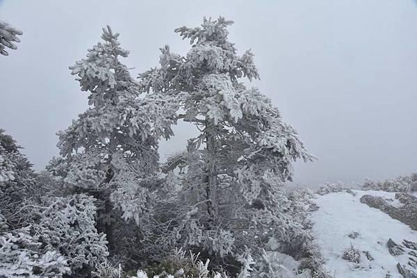 212合歡山追雪21.jpg