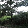 塔曼山1.jpg