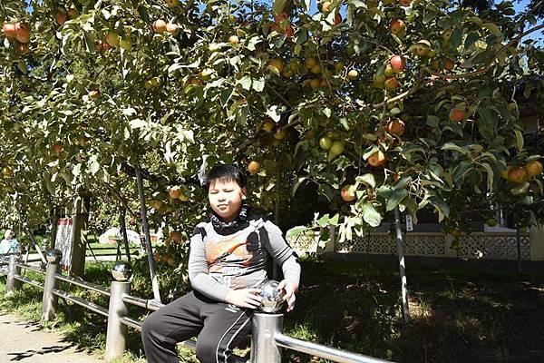 蘋果王10.jpg