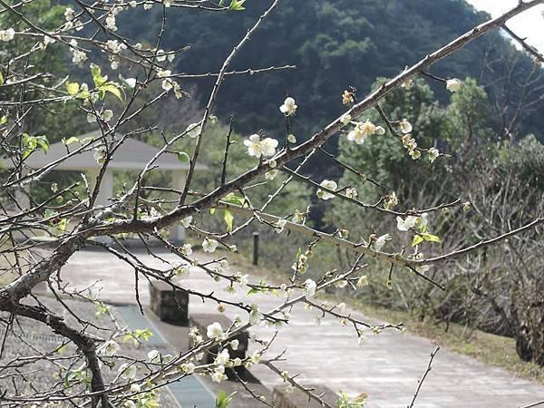梅山遊客中心10.jpg
