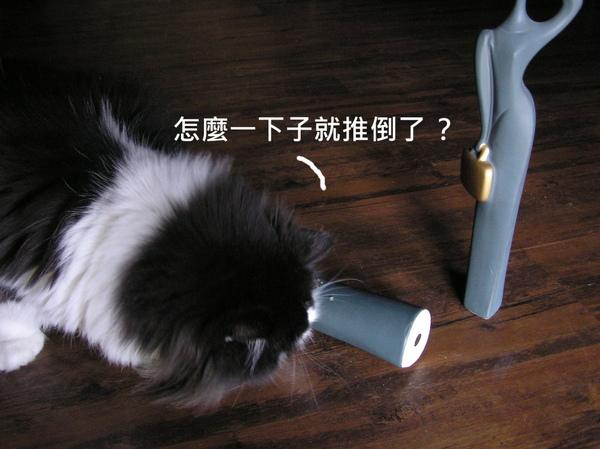貓 (10).JPG
