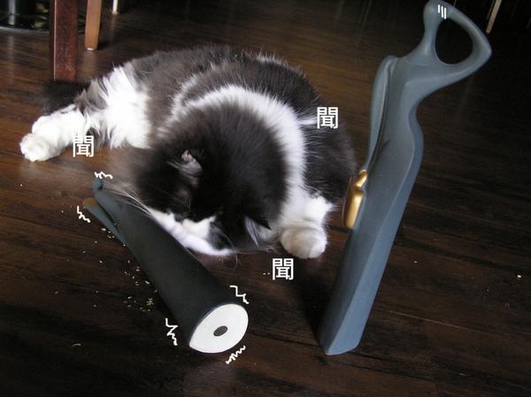 貓 (11).JPG