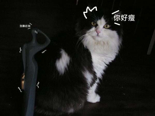 貓 (12).JPG