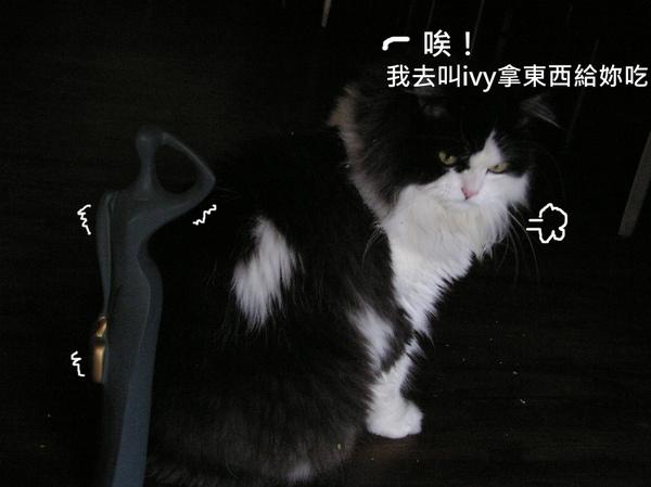貓 (13).JPG