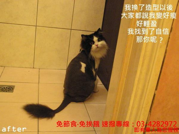 cats (4).JPG