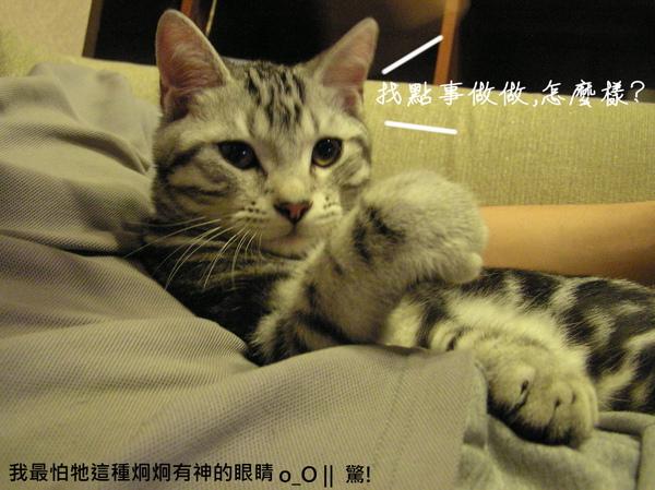 cats (23).JPG