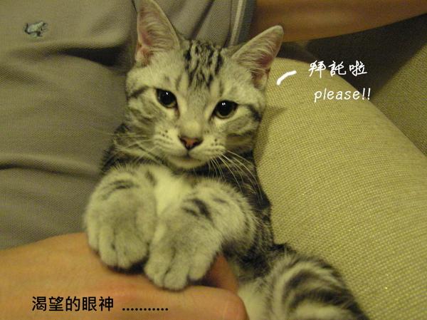 cats (31).JPG
