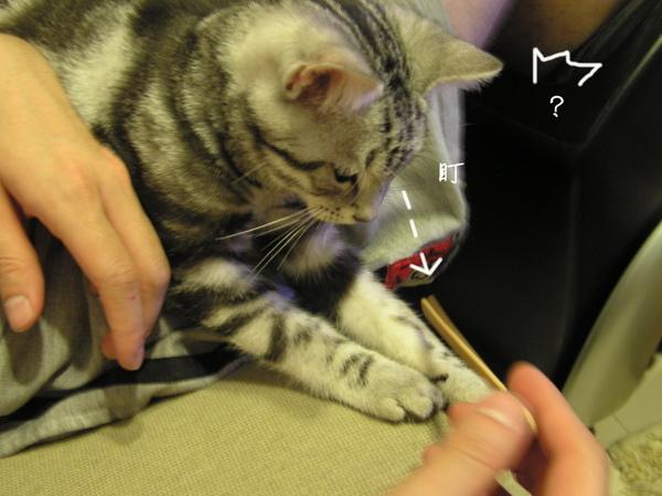 cats (13).JPG