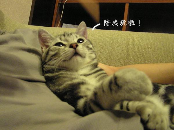 cats (24).JPG