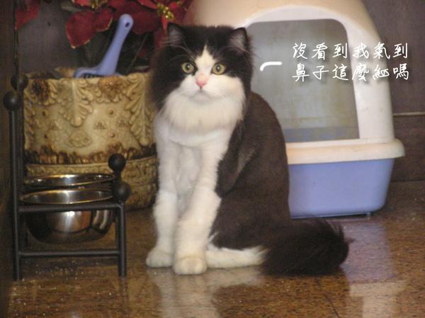 貓狗 (13).JPG