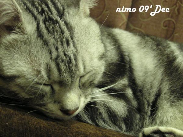 nimo啦 (22).jpg