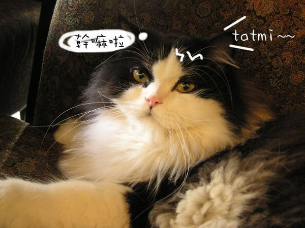 tatami~ (24).jpg