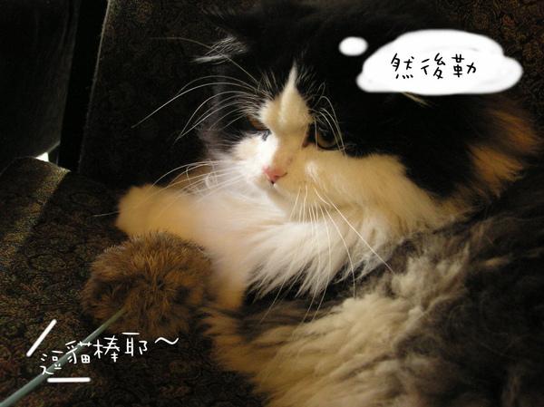 tatami~ (26).jpg