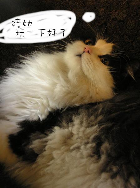 tatami~ (167).jpg