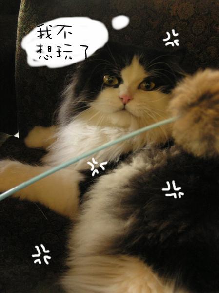 tatami~ (29).jpg