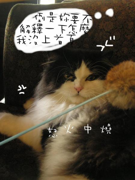tatami~ (28).jpg
