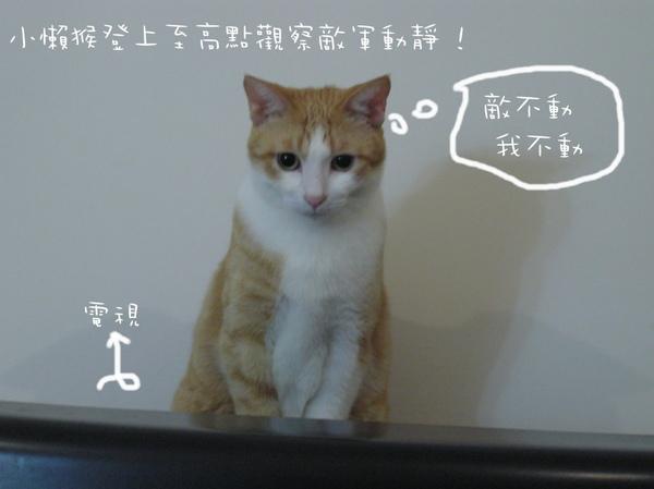 貓咪 (26).jpg