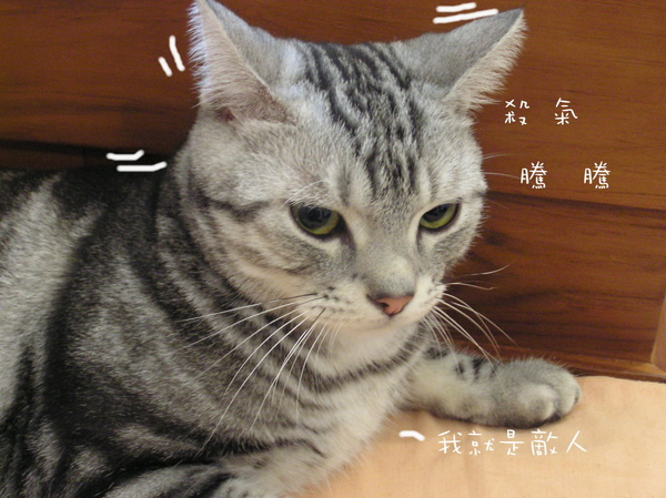 貓咪 (28).jpg