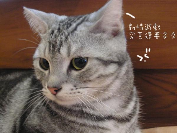 貓咪 (29).jpg