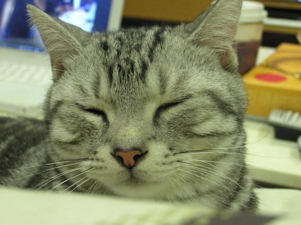貓咪 (70).jpg