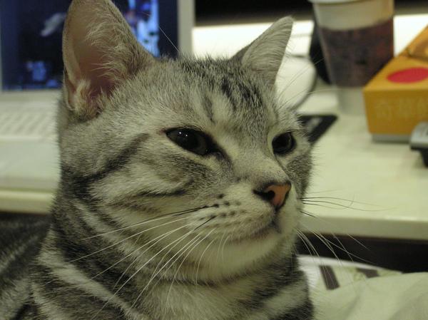 貓咪 (77).jpg