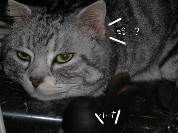 fufu (19).JPG