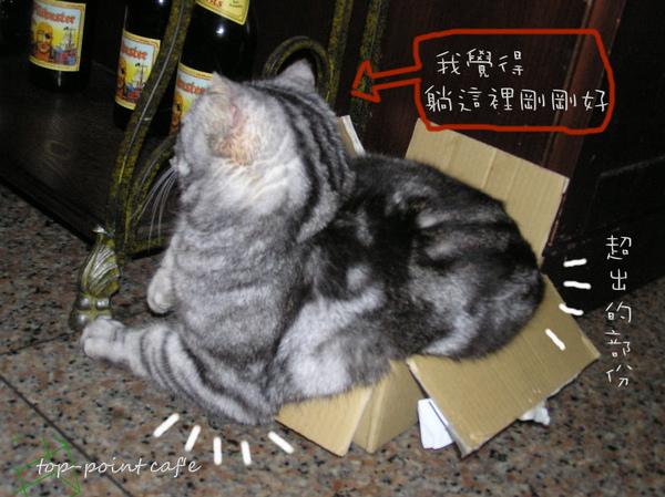 紙箱 (5).JPG
