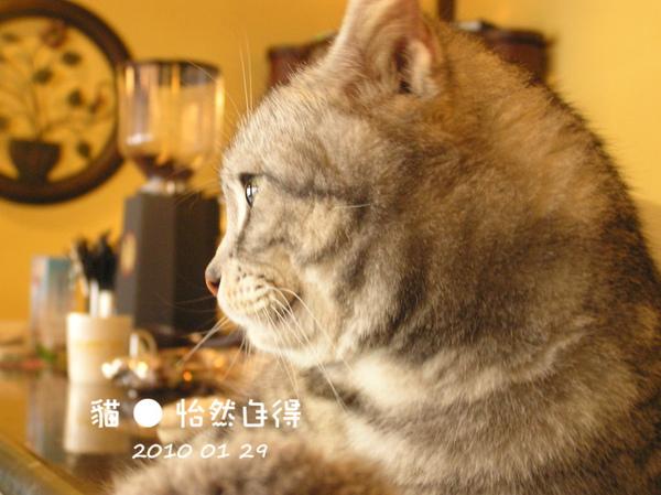 怡然自得 (25).JPG