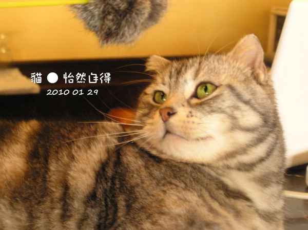 怡然自得 (35).JPG