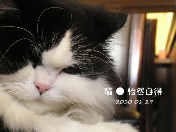 怡然自得 (49).JPG