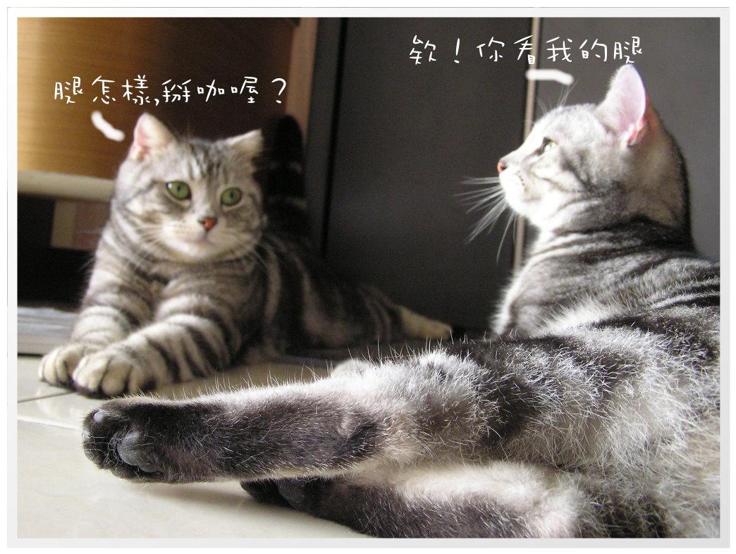 貓咪在家 (44).JPG